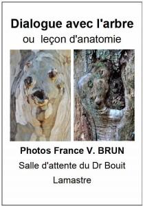 dialogue avec l'arbre ou leçon d'anatomie france vianes brun