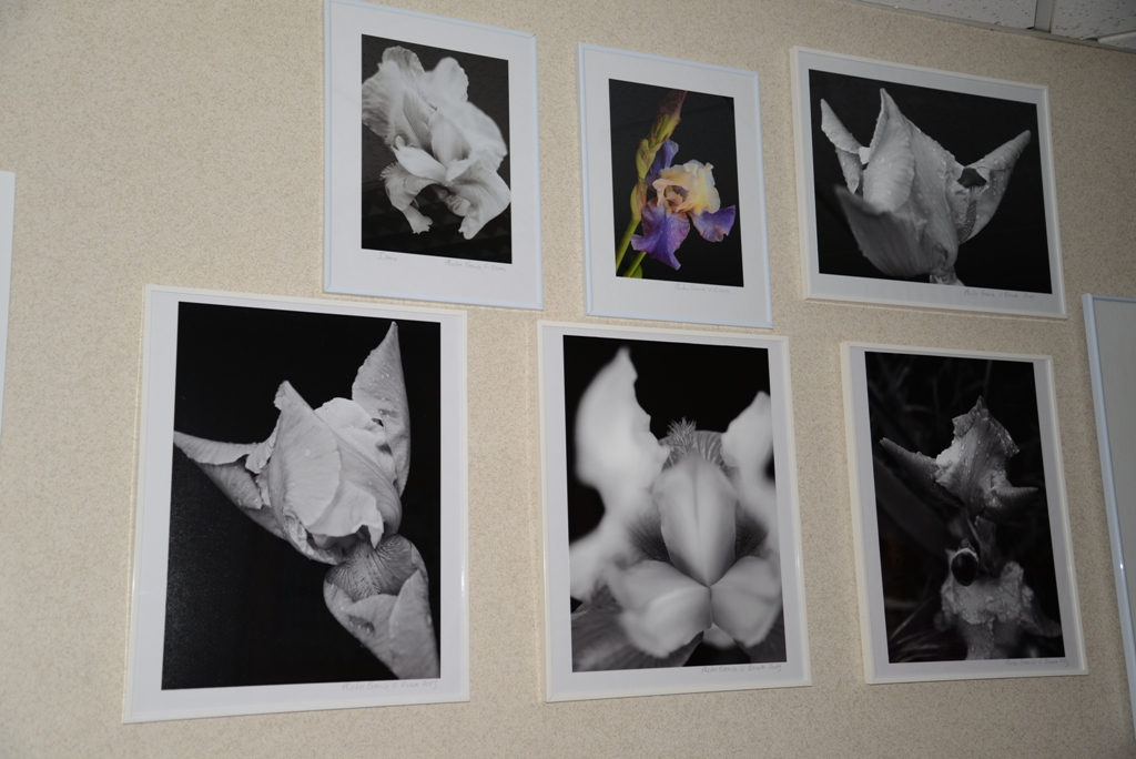 expo photo france vianes brun iris 1