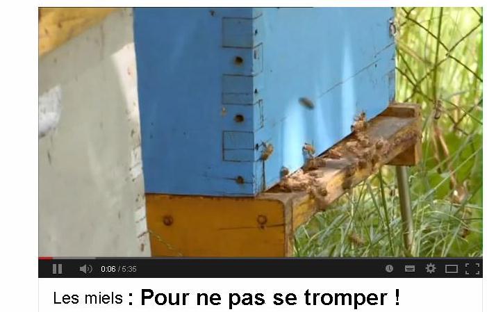 Miels pour ne pas se tromper