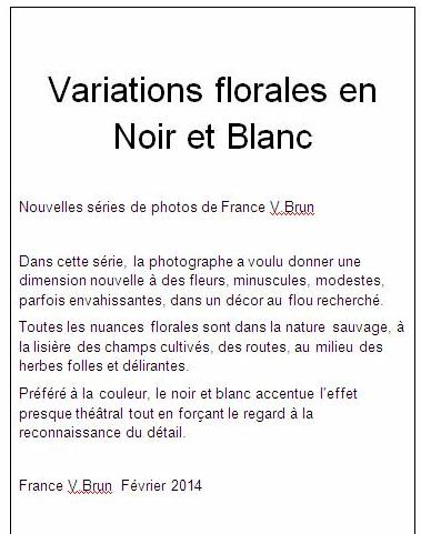 series photos variations florale noir blanc france V brun