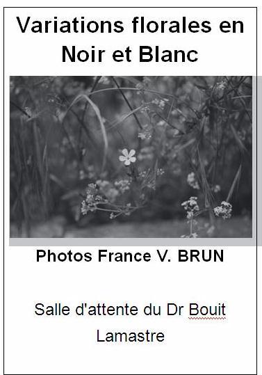 variations florales en noir et blanc france vianes brun