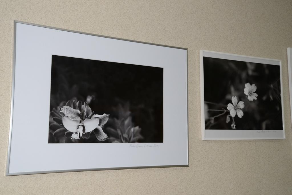 variations florales noir blanc vianes brun 1
