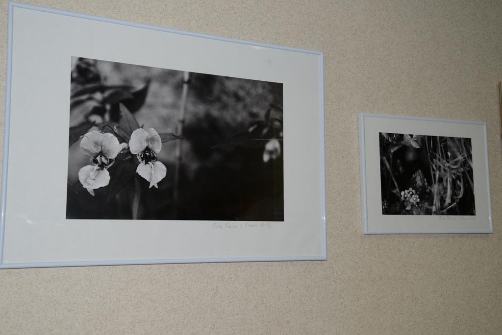 variations florales noir blanc vianes brun 2